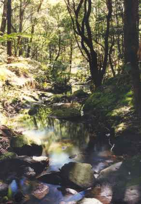 Blue_Gum_Creek